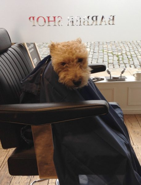 Pip, another valued member of our team offering customers and staff alike his friendship!
